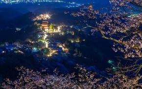 Wallpaper mountains, home, panorama, Japan, lights, night, Sakura, branches, forest