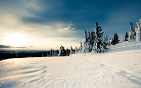 Picture winter, forest, the sky, Snow