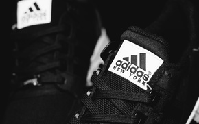 Picture laces, Adidas, New York, EQT
