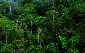 Picture forest, tropics, jungle