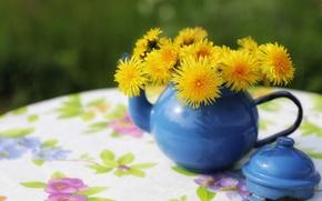 Picture kettle, dandelions, a bunch