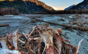 Wallpaper Squamish, mountains, driftwood, trees, Canada, forest, sand
