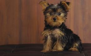 Wallpaper look, puppy