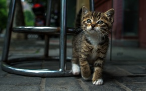 Picture eyes, street, Kitty