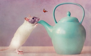 Picture thirst, mouse, kettle