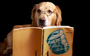 Picture each, dog, book