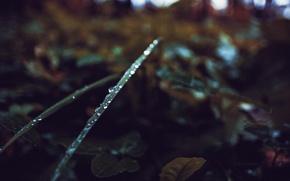 Picture autumn, grass, drops, green, Russia, dobraatebe