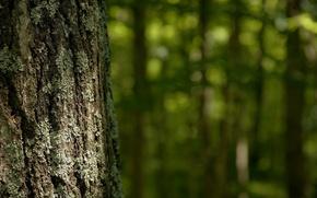 Picture moss, Trunk, bark, raytest