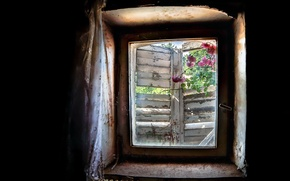 Picture flowers, background, window