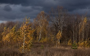 Picture autumn, Russia, homes