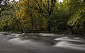 Picture autumn, forest, trees, river, stream