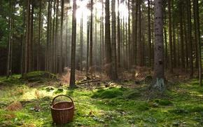 Wallpaper Artstetten-Pubring, basket, trees, grass, forest, Austria, moss
