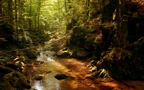 Wallpaper thicket, river, the sun, thickets, river, forest