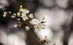 Picture flowers, nature, tree, branch, spring, flowers