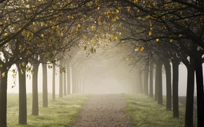 Picture alley, road, trees, autumn, fog