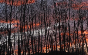 Picture forest, the sky, trees, sunset, nature, the evening, forest, Nature, silhouettes, sky, trees, sunset, evening