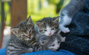 Picture look, kittens, kids
