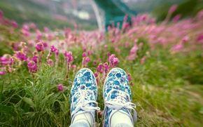 Picture grass, flowers, bokeh