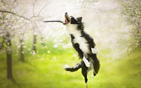 Wallpaper dog, the game, jump