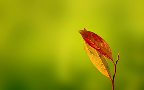 Picture greens, autumn, Gentle Caress, leaves