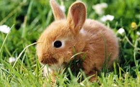Picture fluffy, rabbit, baby