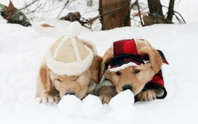 Picture winter, dogs, snow, clothing, the game, puppies, pair, costume, two, friends, two, cap, cute, outfit, …