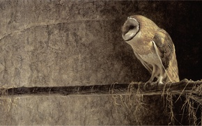 Picture owl, painting, Robert Bateman, Robert Batman