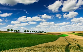 Picture field, the sky, clouds, trees, horizon, farm