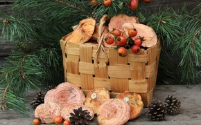 Picture basket, mushrooms, briar, bumps, pine, mushrooms