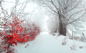 Picture morning, merry christmas, winter, leaves, tree, alley, snow, Landscapes, nature, fog, panorama, the bushes, new ...