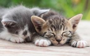 Picture stay, sleep, kittens, a couple