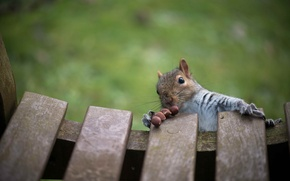 Picture animal, protein, nuts, food, bench, rodent