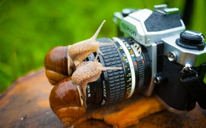 Picture animals, macro, the camera, Snails, nikon