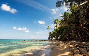Picture sand, sea, beach, tropics, stones, palm trees