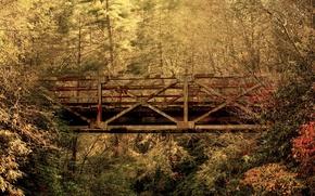 Wallpaper South Carolina, bridge, autumn, forest, leaves