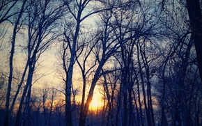 Picture The sun, The sky, Nature, Trees, Forest, Landscape, Forest, Filters, Different, The background