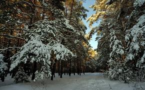 Picture winter, forest, snow, landscape