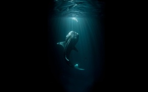 Picture sea, water, light, the ocean, dark, monster, shadow, fish, shark, depth, large, tail, huge, giant, …