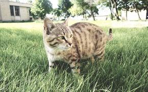 Picture cat, iran, ardabil