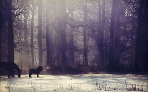 Picture winter, forest, the sun, snow, fog, horse, pony