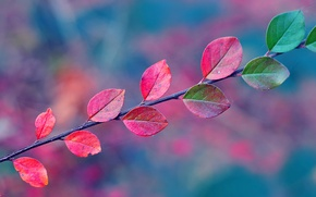 Picture leaves, web, branch, Autumn