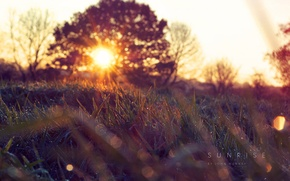 Picture grass, the sun, nature, spring, morning, Kapi