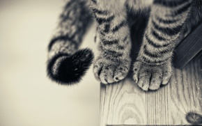 Wallpaper table, paws, Cat, black and white