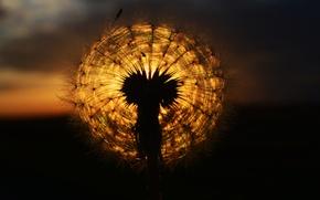 Picture the sun, sunset, dandelion