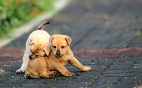 Picture road, the game, puppies, funny