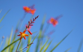 Picture the sky, grass, flowers, plant