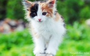 Picture kitty, spotted cat, tortoiseshell cat