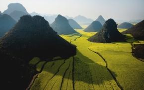 Picture green, apple, wide, sky, field, mountain