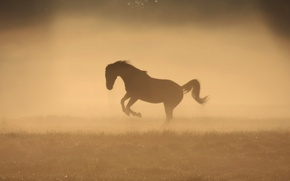Picture fog, Rosa, horse, horse, morning