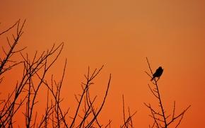 Picture autumn, the sky, sunset, orange, nature, tree, pen, bird, black